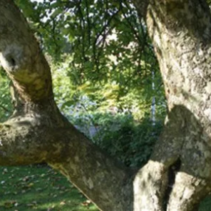 Close up image of a bent tree